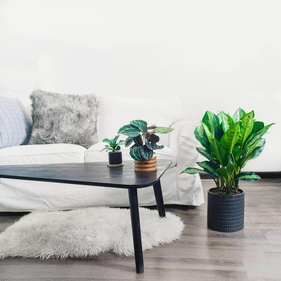 Thiết kế nhà đẹp - Gợi ý 3 loại cây thích hợp trồng trong nhà